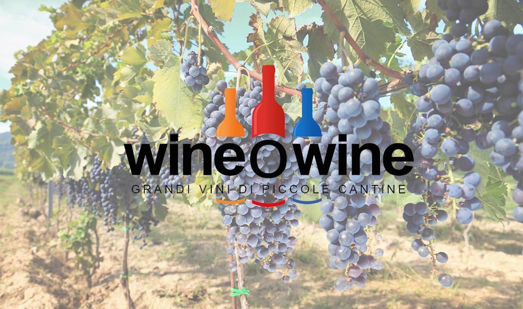 WineOwine – Un'idea vincente per promuovere i grandi vini delle piccole cantine